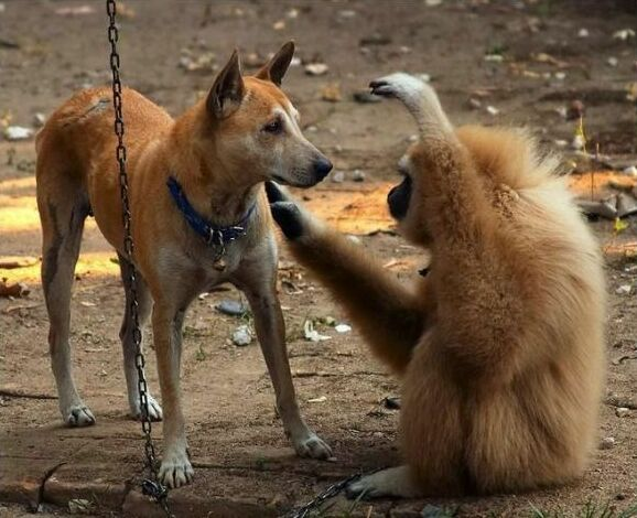 Dog and Monkey Friendship