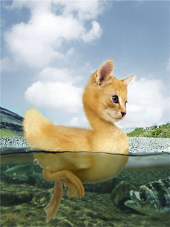 Funny Cat Duck