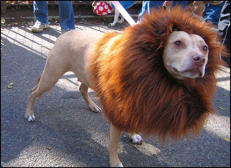 Lion-dog