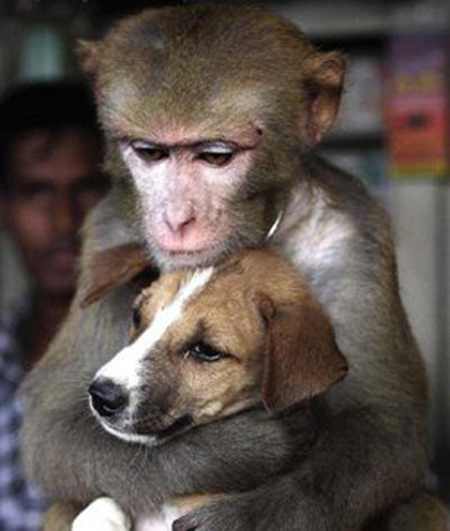 Monkey and dog as friends