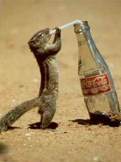 Animal photos - Funny Sip