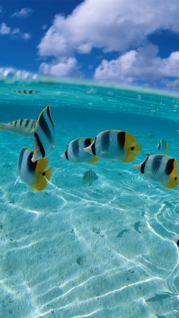 island fishes