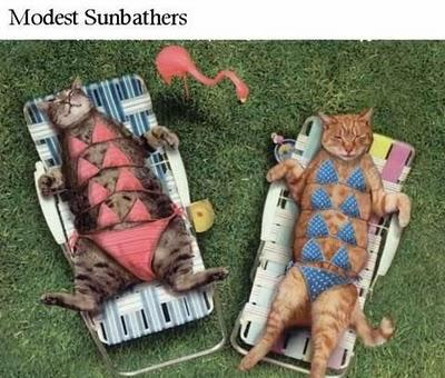Cats Sunbathing
