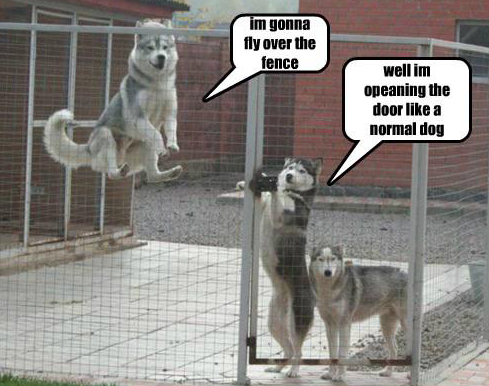 I'm gonna fly over the fence...
