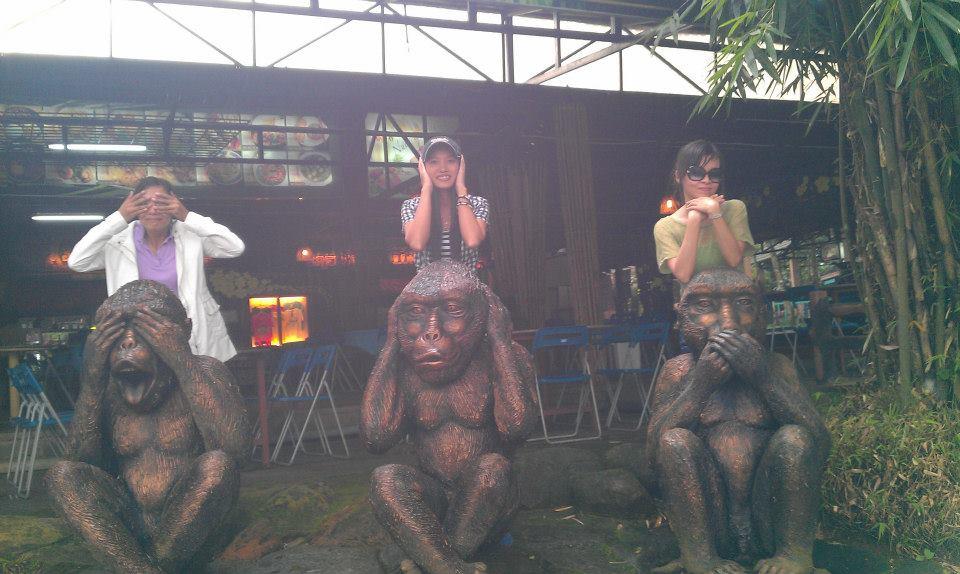 Monkeys vs Orang-utan