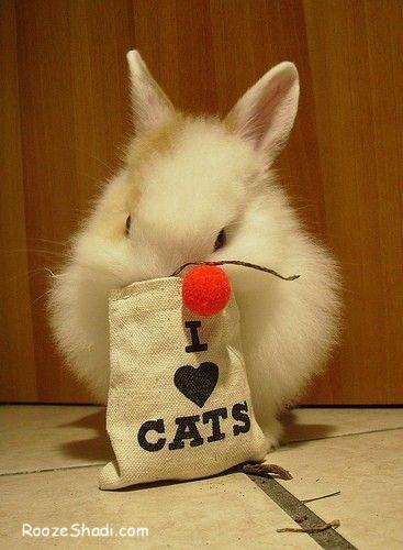 I Iove Cat