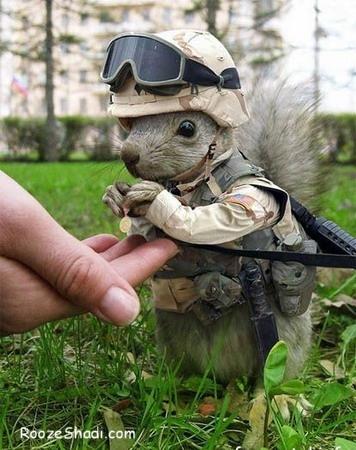 Chipmunks in army
