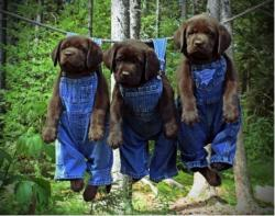 Funny photos - Drip Dry Dogs