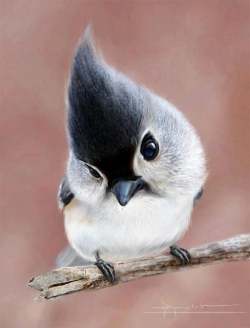 Animal photos - cute tufted titmouse