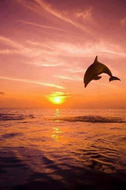 Funny photos - happy dolphin so cute \(*u*)/