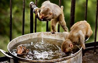Awwww monkey
