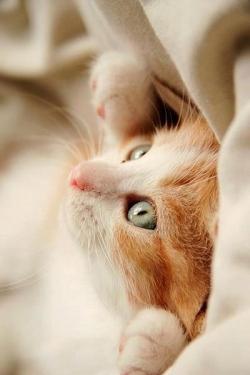 Animal photos - cute
