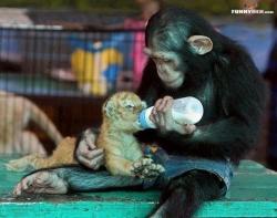 Animal photos - ♥
