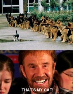 Funny photos - chuck norris rullz!