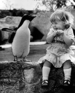 Animal photos - Penguin and baby