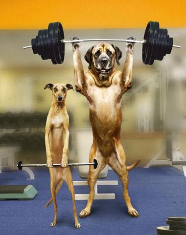 We are bodybuilders