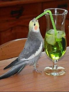 Intelligent Bird