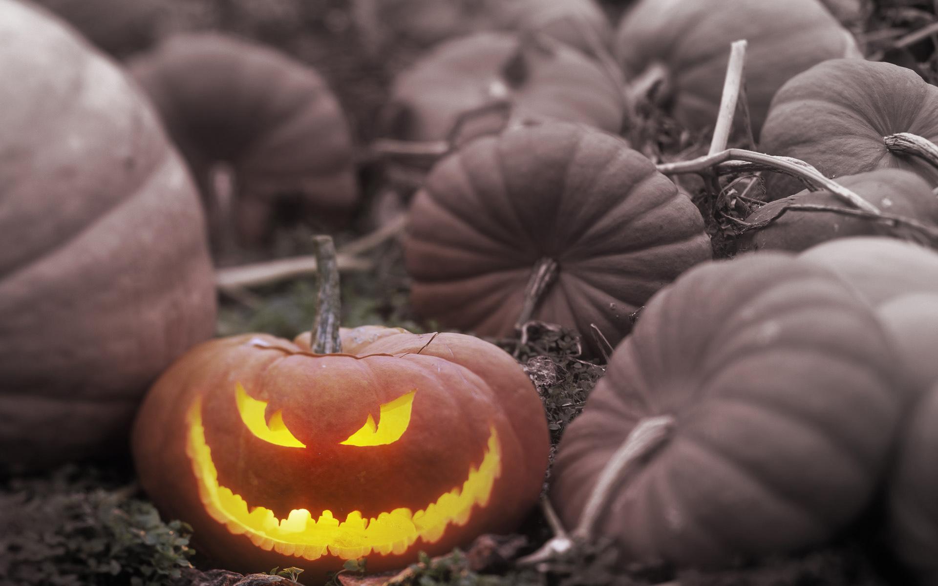 Halloween Beautiful Pumpkin