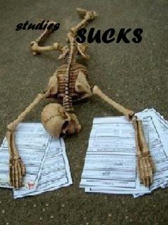 Studies Sucks