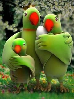 Cute Parrets