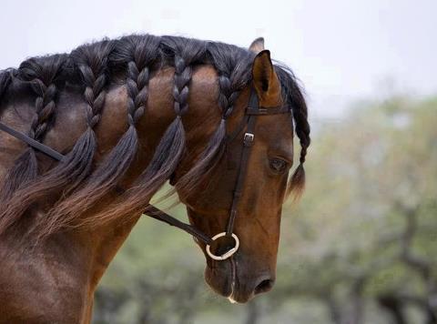 Nice Hair girl