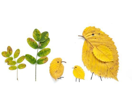 Leaves bird