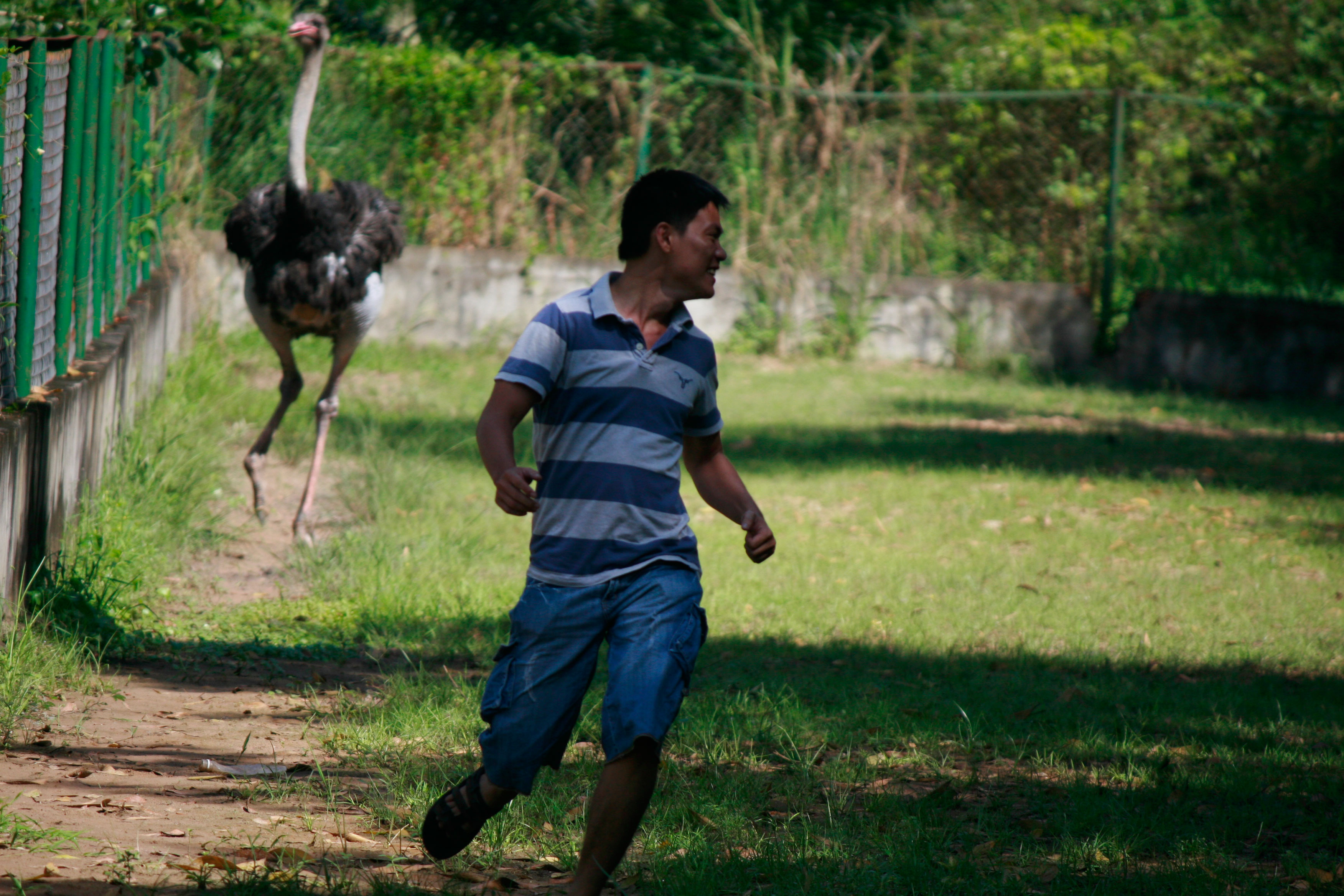 Ostrich Revenge!