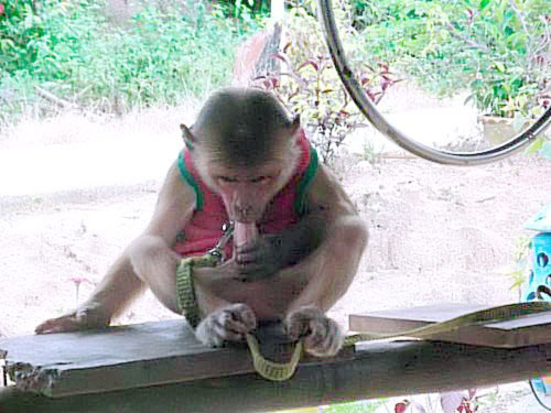 LOL Monkey