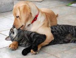 Animal photos - I love you baby