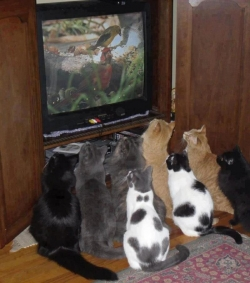 Animal photos - What are they watching?