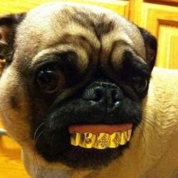 Funny photos - Dog tooth art