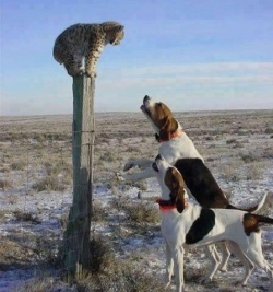 Funny photos - Let me alone dogs!!