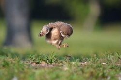 Funny photos - Learning to Fly