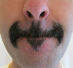 Funny photos - BAT stache