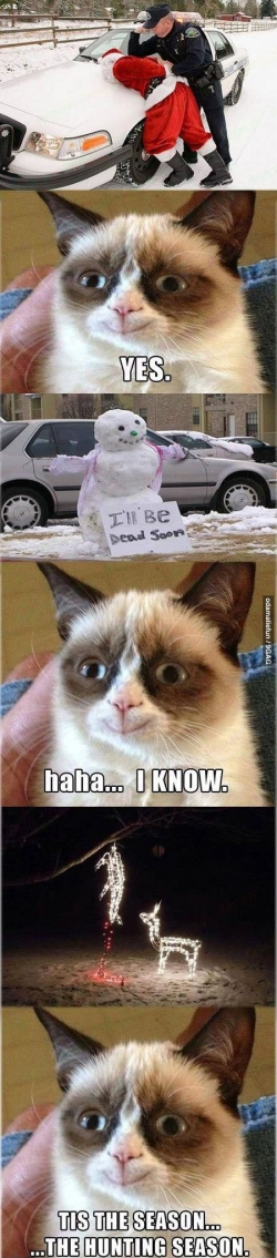 Funny photos - Grumpy cat is very pleased