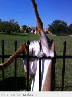 Funny photos - Hardly accident
