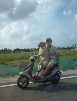 Funny photos - Dog drive motobike