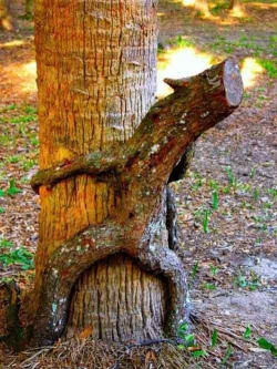 Funny photos - Funny tree