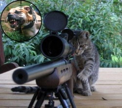 Funny photos - Sniper  Cat