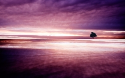 Art Wallpaper - Purple nature