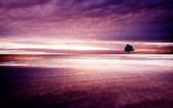 Art Wallpaper - Purple nature