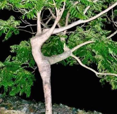Hot tree