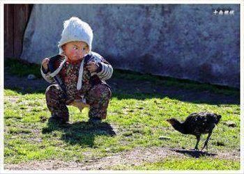 Baby vs chicken
