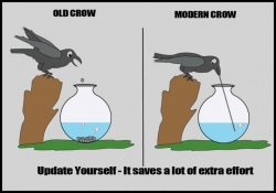 Animal photos - Old Crow and Modern Crow