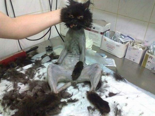 Naked Cat !