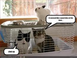Fail cats