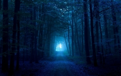 Nature Wallpaper - Wood gloomy light pass path track dark blue fog exit