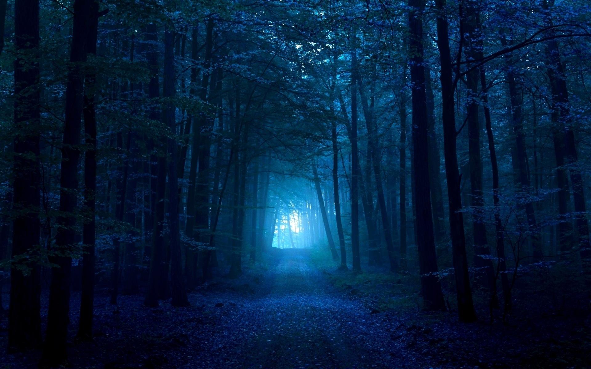 Wood gloomy light pass path track dark blue fog exit