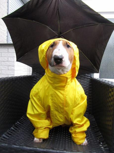 Waiting for raining