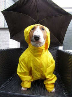Animal photos - Waiting for raining